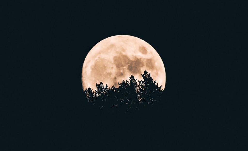Image of a moon and the trees at night